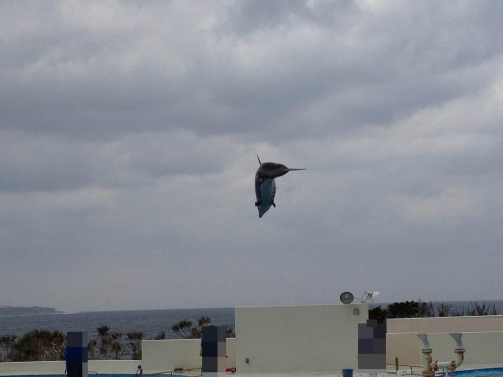 2匹そろってジャンプするミナミバンドウイルカたち