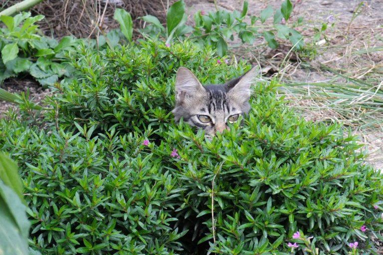 人目につかないよう隠れる猫