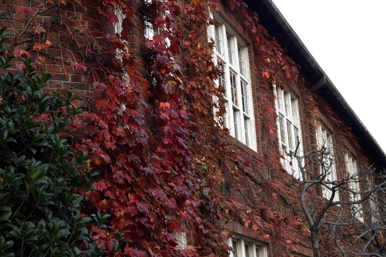 場面緘黙の症状が大幅に改善した大学時代を振り返る