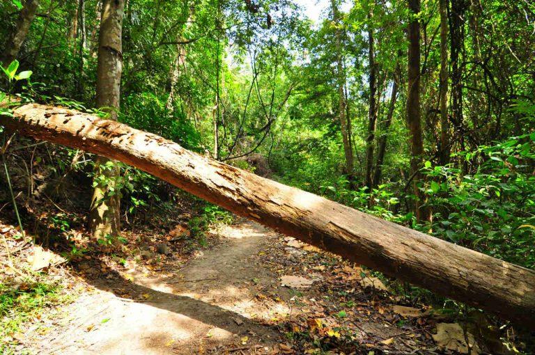 行く手を妨げる木