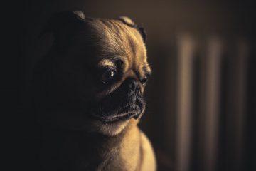 他人が怒られているのを見ると悲しくなりませんか?